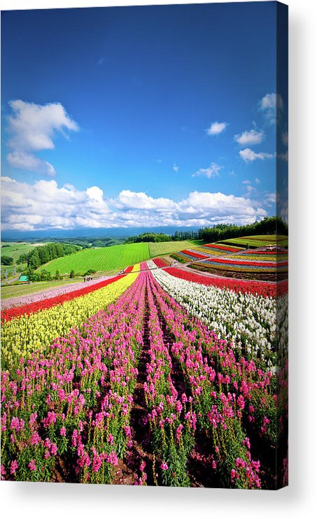 Tranquility Acrylic Print featuring the photograph Summer Of Furano by Grace's Photo
