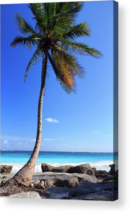 Scenics Acrylic Print featuring the photograph Tulum Mexico Single Tree On Beach by Maria Swärd