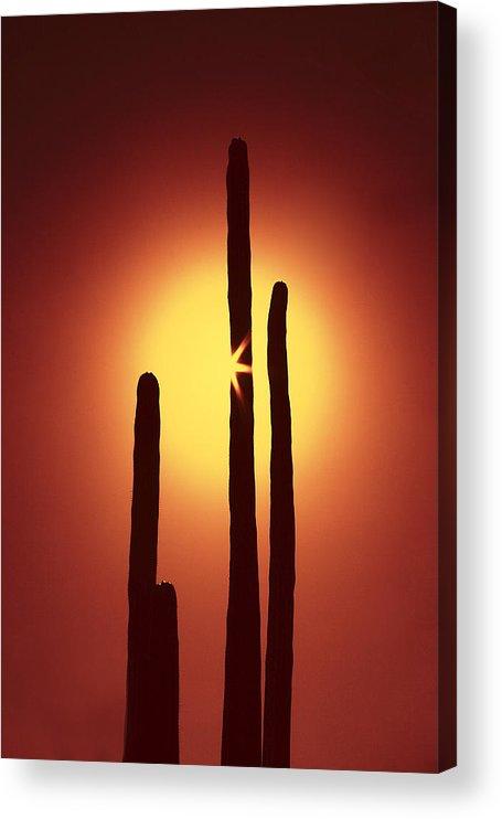 Sun Acrylic Print featuring the photograph Encinitas Cactus by Andre Aleksis