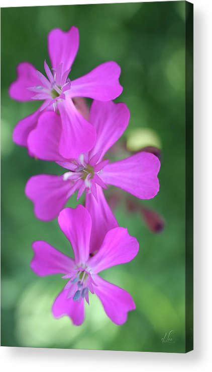 Pink Acrylic Print featuring the photograph Pink Spinning Flowers by D Lee