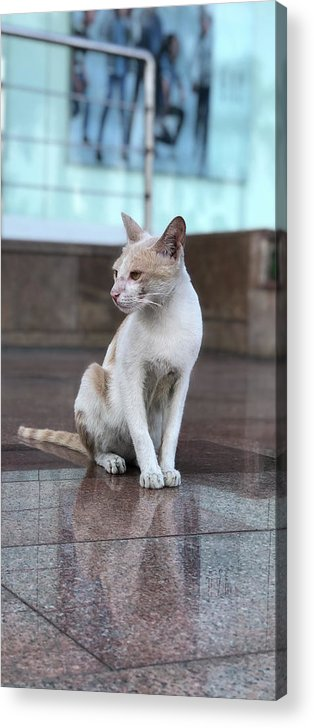 Wallpaper Acrylic Print featuring the photograph Cat Sitting On Marble Floor by Prashant Dalal