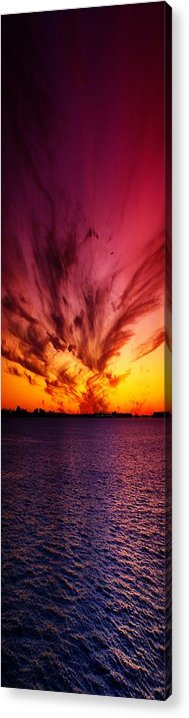 Nature Acrylic Print featuring the photograph Showoff II by Florene Welebny