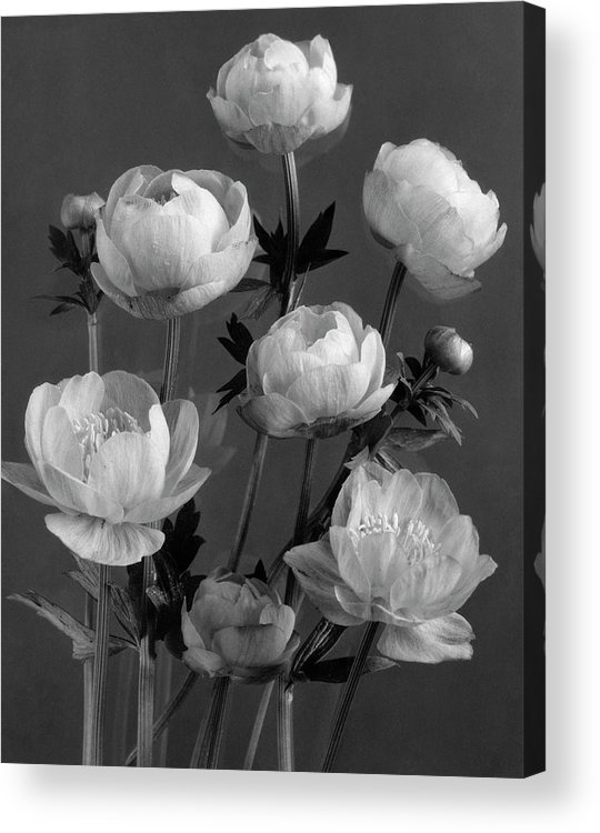 Flowers Acrylic Print featuring the photograph Still Life Of Flowers by J. Horace McFarland