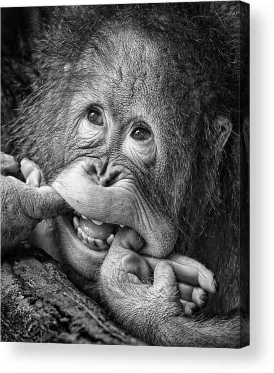 Ape Acrylic Print featuring the photograph Big Smile.....please by Angela Muliani Hartojo