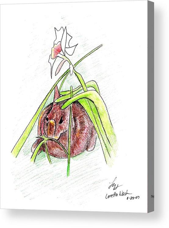 Rabbit Acrylic Print featuring the drawing Rabbit by Loretta Nash