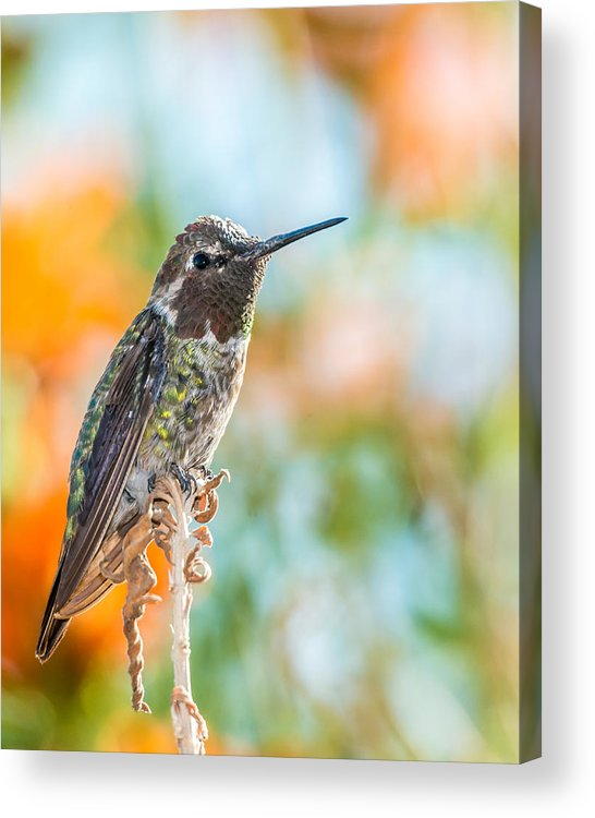 Nature Acrylic Print featuring the photograph Resting by Paul Johnson