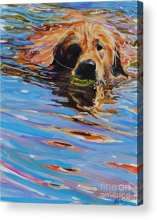Golden Retriever Acrylic Print featuring the painting Sadie Has A Ball by Molly Poole