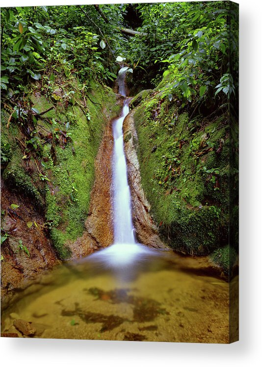South America Acrylic Print featuring the photograph Small Waterfall In Tropical Rain Forest by Fstoplight