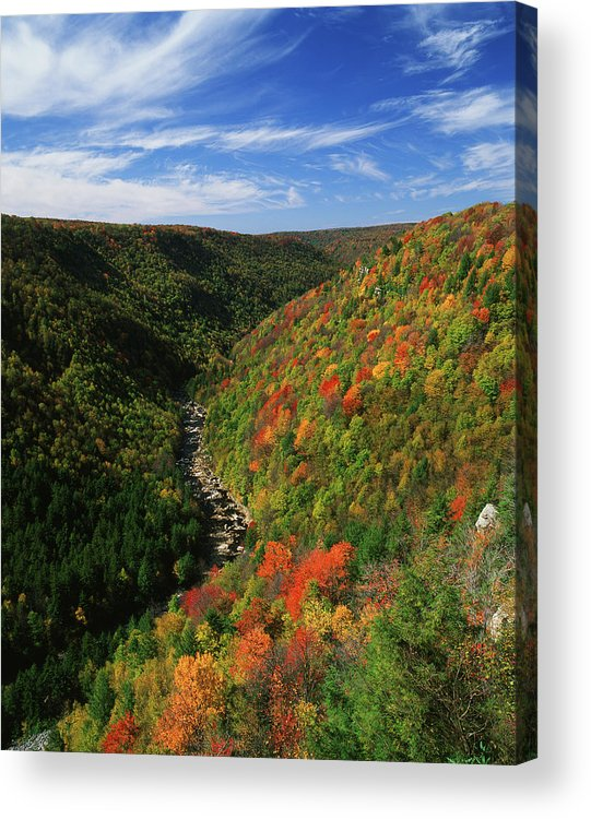 Scenics Acrylic Print featuring the photograph View Of Blackwater Canyon In Autumn by Danita Delimont