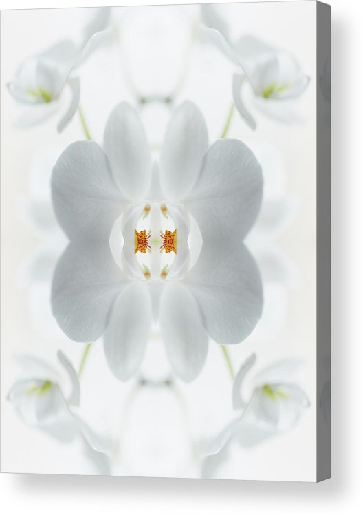 Tranquility Acrylic Print featuring the photograph White Orchid Flower by Silvia Otte