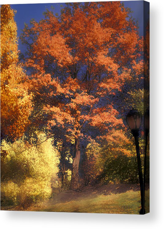 Autumn Acrylic Print featuring the photograph Central Park by Jim Painter