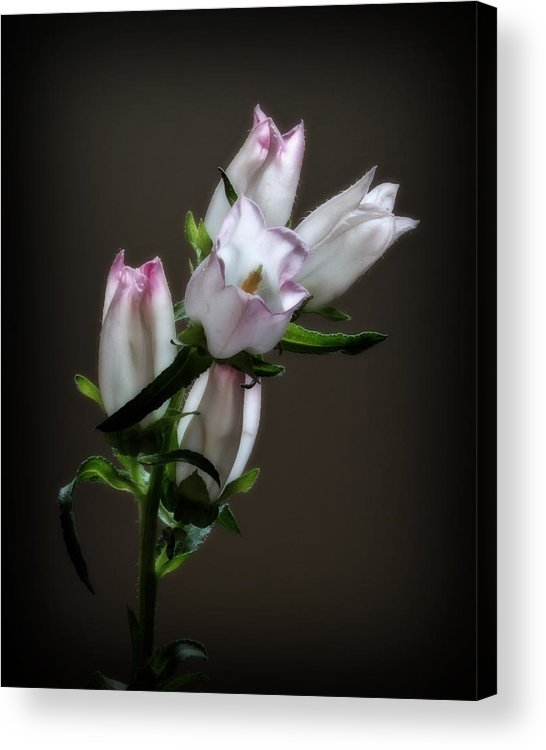 Flower Acrylic Print featuring the photograph Flowers by Dave Chafin