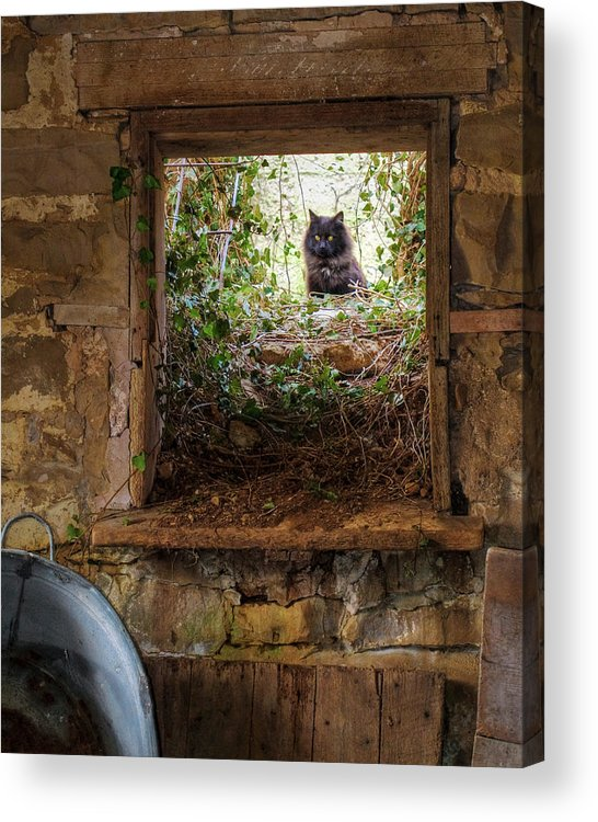 Animals Acrylic Print featuring the photograph The Barn Cat by Ron McGinnis