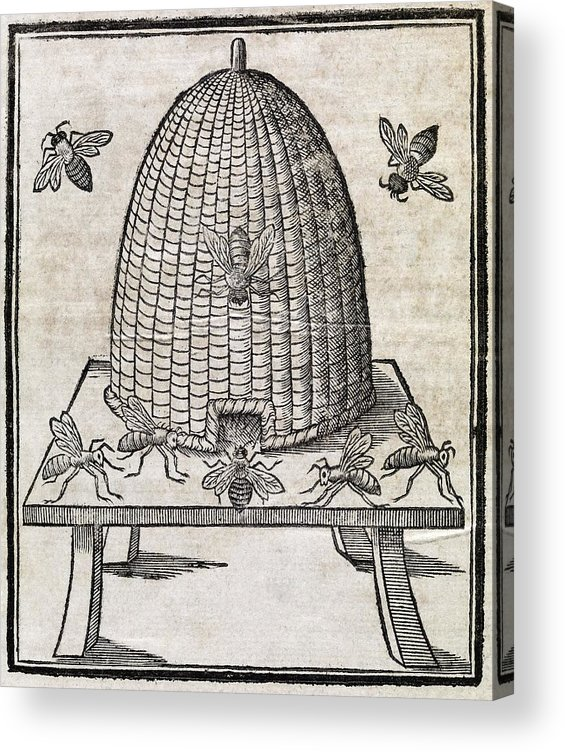 Animal Acrylic Print featuring the photograph Bees And Beehive, 17th Century Artwork by Middle Temple Library