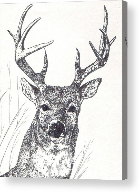 Whitetail Deer Acrylic Print featuring the painting Big Buck by Debra Sandstrom