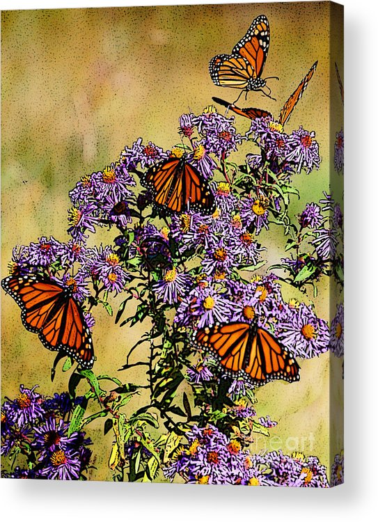 Diane Berry Acrylic Print featuring the drawing Butterfly Party by Diane E Berry