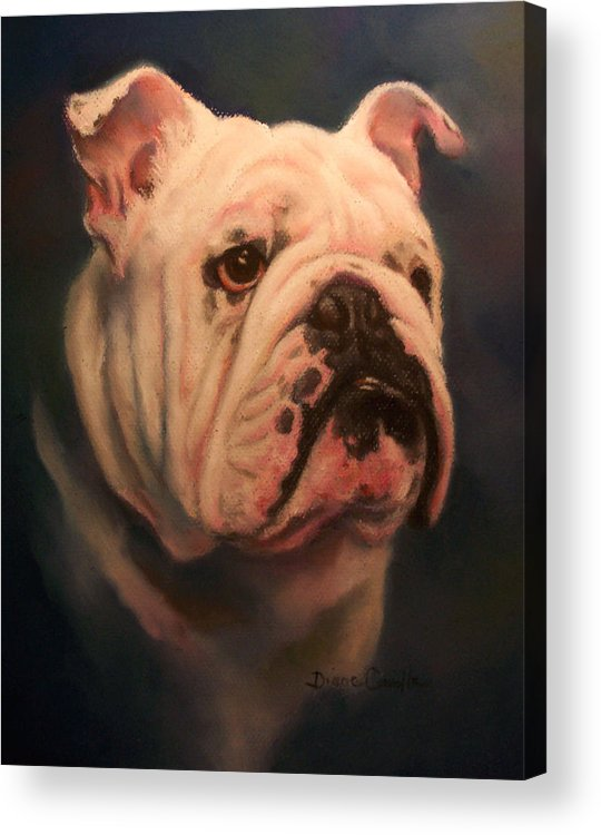 English Bull Dog Acrylic Print featuring the painting Caesar by Diane Caudle