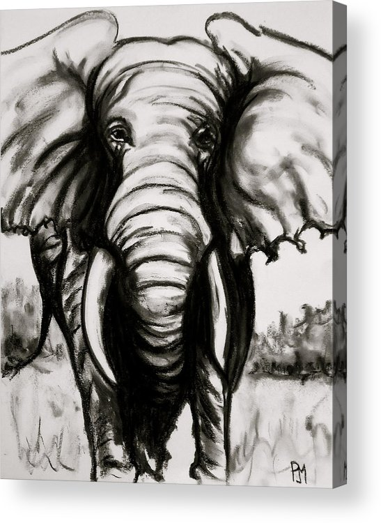 Elephant Acrylic Print featuring the drawing Charcoal by Pete Maier
