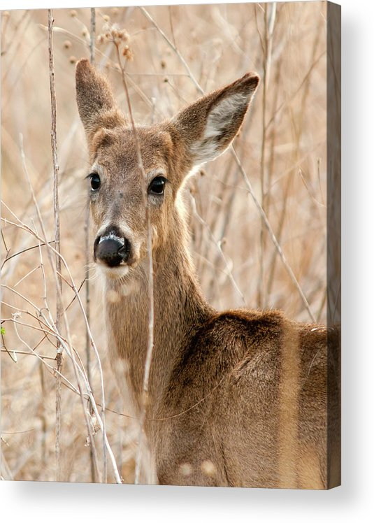 Wildlife Acrylic Print featuring the photograph Close Encounter by Ron McGinnis