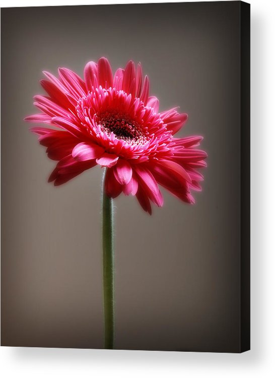 Flower Acrylic Print featuring the photograph Flower by Dave Chafin