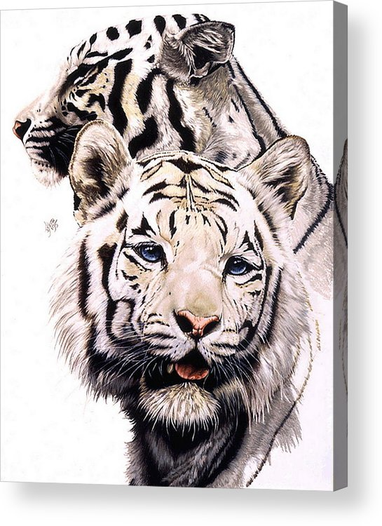 Tiger Acrylic Print featuring the drawing Ghost by Barbara Keith