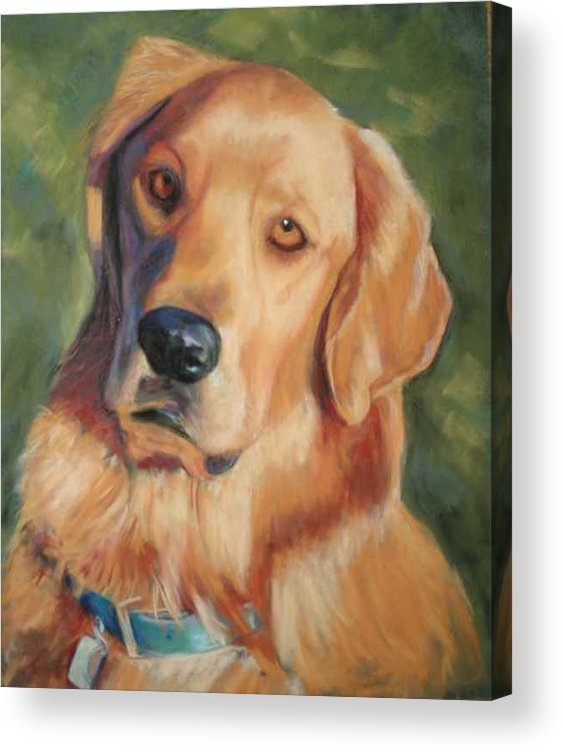 Golden Retriever Acrylic Print featuring the painting Golden Boy by Billie Colson