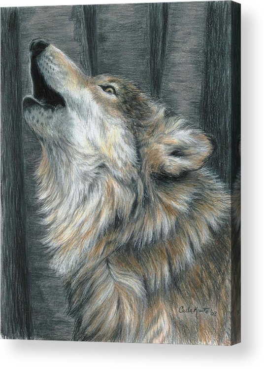 Wolf Acrylic Print featuring the drawing Howling Wolf by Carla Kurt