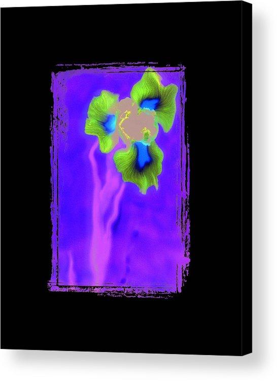 Iris Acrylic Print featuring the photograph Iris by K Randall Wilcox