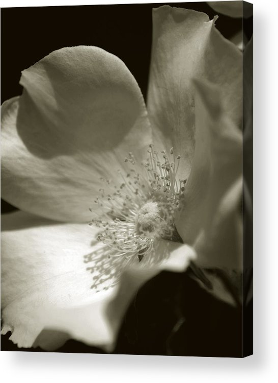 Flower Acrylic Print featuring the photograph Love By The Moon by Amanda Clark