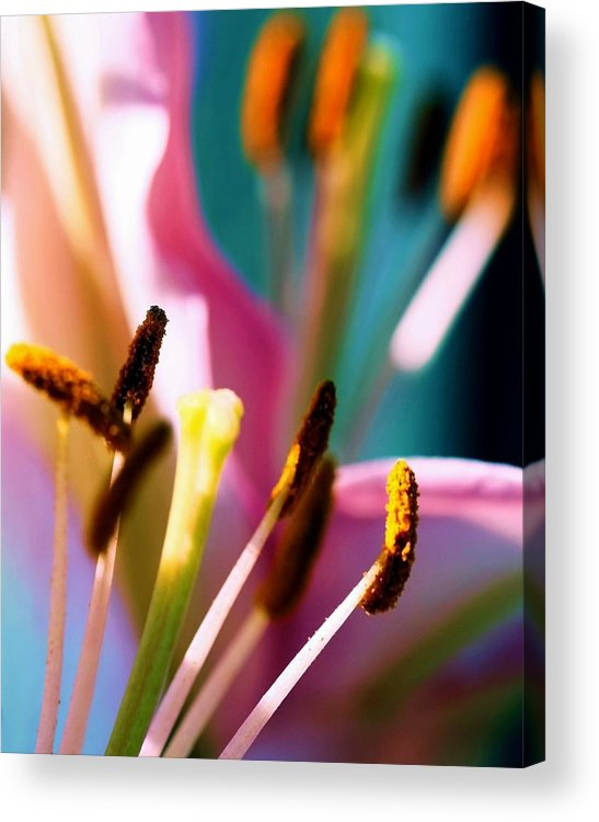 Flower Acrylic Print featuring the photograph Souls by Mitch Cat