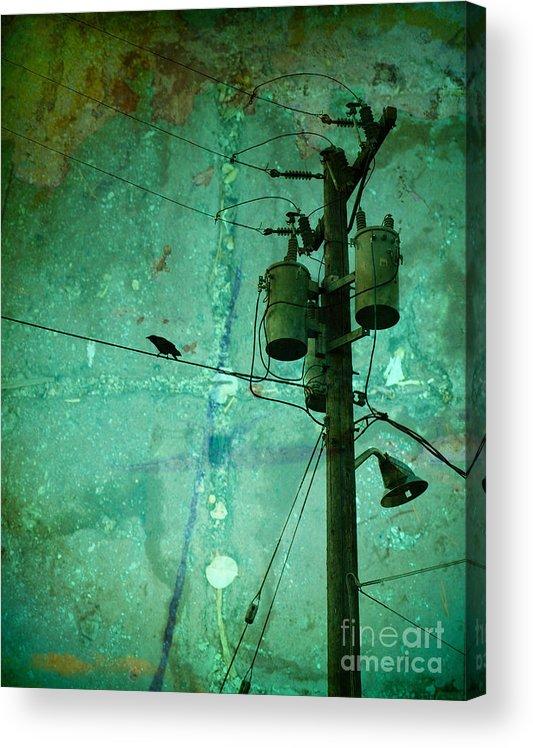 Urban Acrylic Print featuring the photograph The Urban Crow by Tara Turner