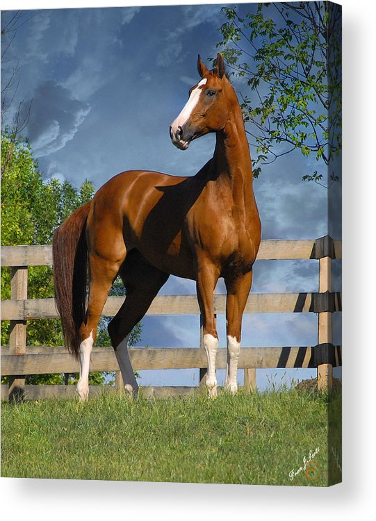 Horses Acrylic Print featuring the photograph Welt Adel by Fran J Scott