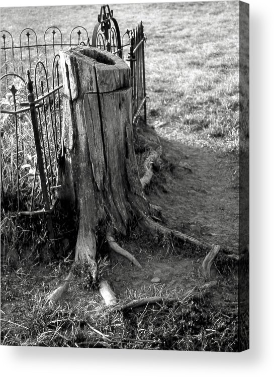 Ansel Adams Acrylic Print featuring the photograph Where the cows can by Curtis J Neeley Jr