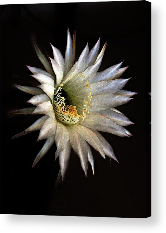 Flowers Acrylic Print featuring the photograph White Fire by Richard Gordon
