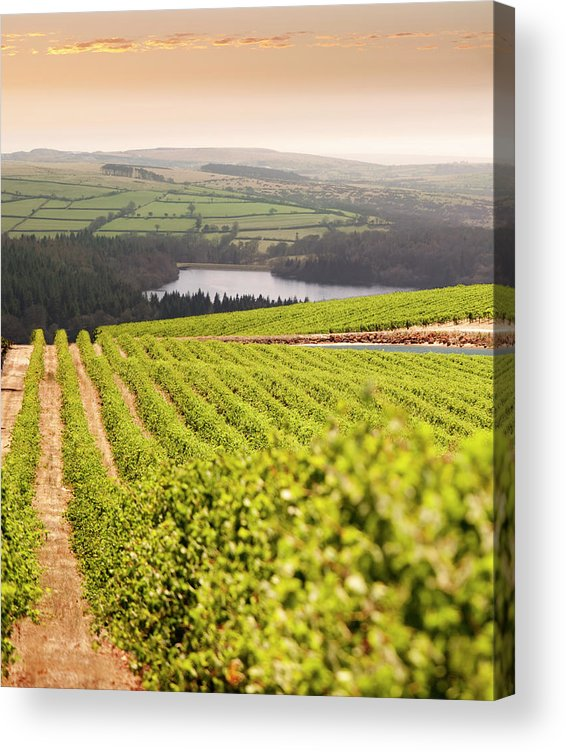 Scenics Acrylic Print featuring the photograph Vineyard At Sunset by Lockiecurrie
