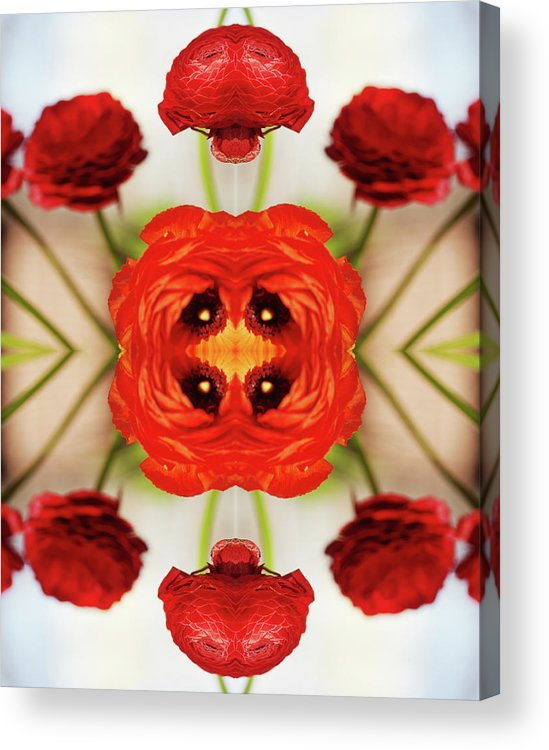 Tranquility Acrylic Print featuring the photograph Ranunculus Flower by Silvia Otte