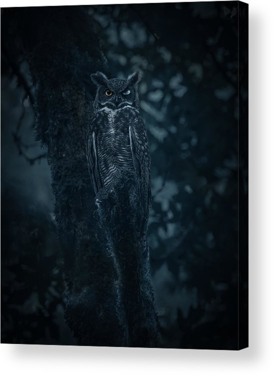 Nature Acrylic Print featuring the photograph Aiming From Darkness by Tony Xu