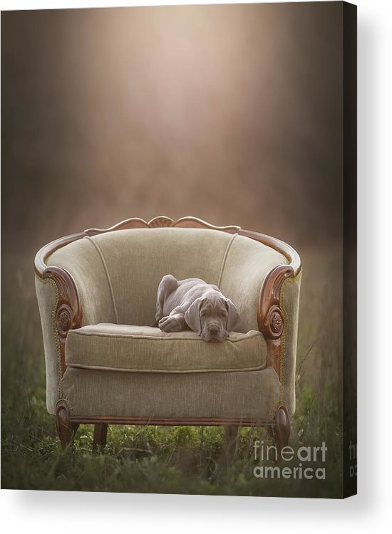 Sofa Acrylic Print featuring the photograph Floyd by Mike Bons