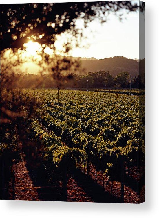 Outdoors Acrylic Print featuring the photograph Vineyard, Napa Valley, California, Usa by Lisa Romerein