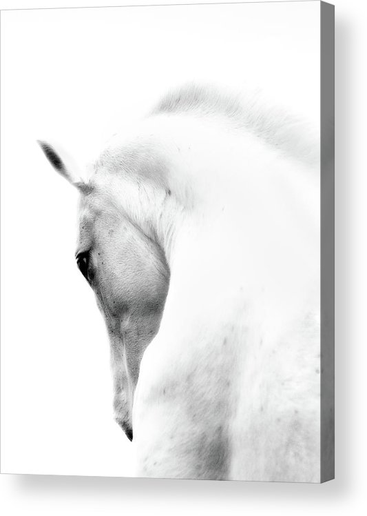 Horse Acrylic Print featuring the photograph White Stallion Andalusian Horse Neck by 66north