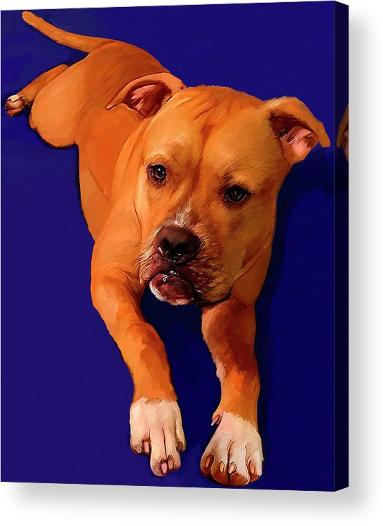 Boxer Acrylic Print featuring the painting Boxer Portrait by Portraits By NC