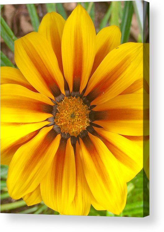 Color Image Acrylic Print featuring the photograph Divine Nature by Heidi Coppock-Beard