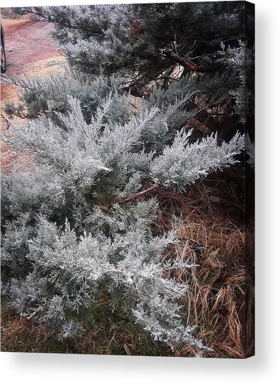 Scenery Acrylic Print featuring the photograph First Frost by Ariana Torralba