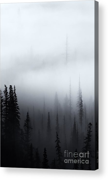 Forest Acrylic Print featuring the photograph Piercing The Clouds by Mike Dawson