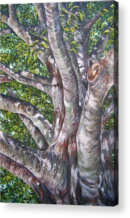 Trees Acrylic Print featuring the painting Beech by Kim Wild
