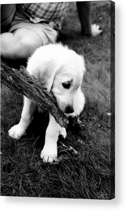 Acrylic Print featuring the photograph Lumi by Cate Rubin