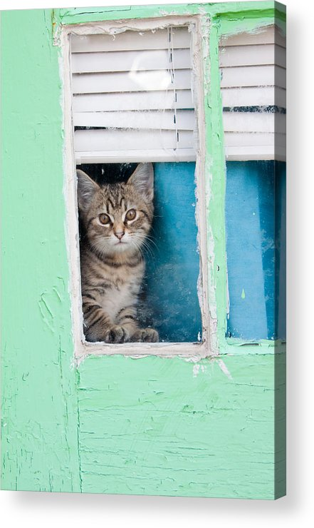 Kitty Acrylic Print featuring the photograph Peek-a-boo by Jean Haynes