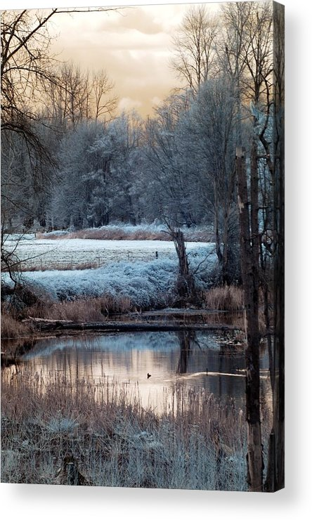 Rebecca Acrylic Print featuring the photograph Small Duck Frosty Morning by Rebecca Parker