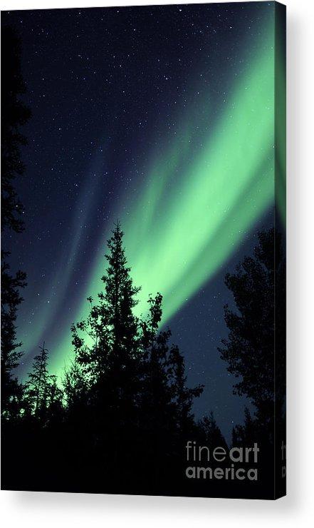 Yellowknife Acrylic Print featuring the photograph Aurora Borealis Above The Trees by Jiri Hermann