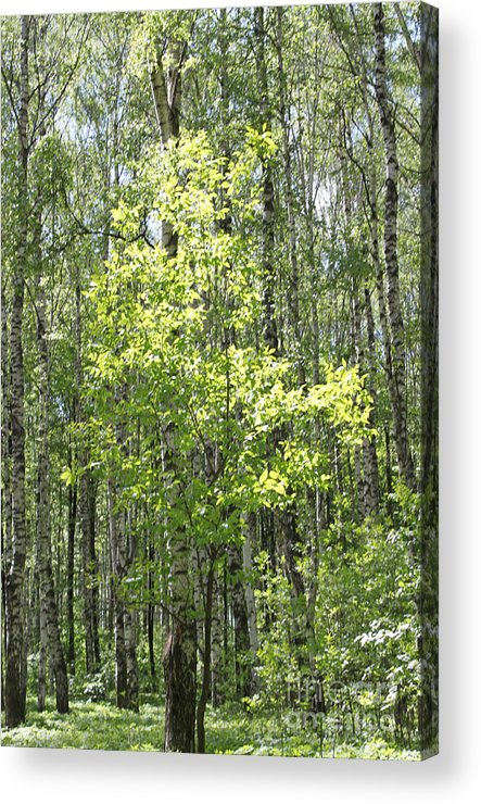 Nature Acrylic Print featuring the photograph Beauty Of Trees by Evgeny Pisarev